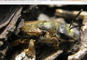 Cover photo for Support Native Pollinators