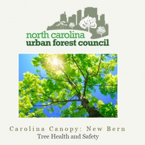 Cover photo for Carolina Canopy:  New Bern - NC Urban Forest Council Workshop