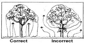fabric drape diagram