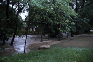 managing downed trees in flood waters