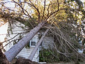 large tree that has fallen on a house