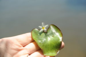 Crested Floating Heart