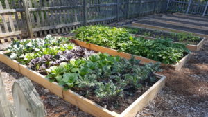Vegetable bed with wooden border