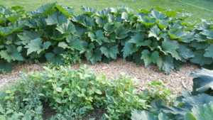 path between vegetable beds with no border