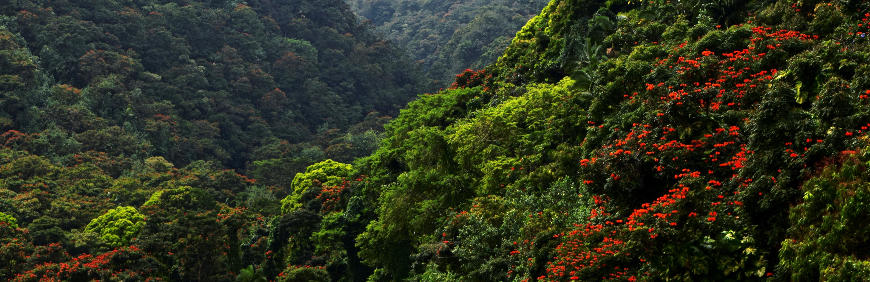 Wapi'o Valley Hawaii